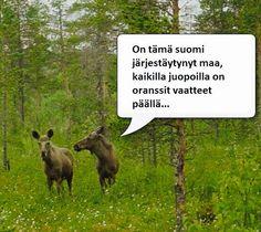 In the finnish hoods