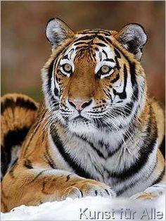Mauritius - Sibirischer Tiger