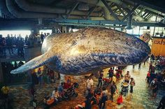 As gray whales migrate through Monterey Bay up to feeding grounds in Alaska, our friendly sky whale statue oversees guests migrating through the Aquarium. Great 📷 by @skairam #repost ・・・ The big whale in the sky. #latergram #aquarium #monterey #montereybayaquarium #montereylocals - posted by Monterey Bay Aquarium https://www.instagram.com/montereybayaquarium - See more of Monterey Bay at http://montereylocals.com