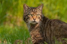 british wildlife - Google Search