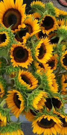 """SUNFLOWERS! They are my favorite.  They remind us that we need to follow the """"Sun"""" or """"Son"""" throughout the day. If we keep Christ as our focus then everything seems a little sunnier.  Let the """"Son"""" shine in on your day."""