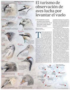 Birdwatching Observación de aves