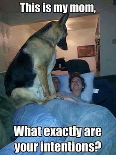 Protecting his mama. Must Love Dogs.