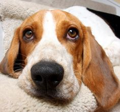 How to Get Dog Urine Smell Out of Carpet