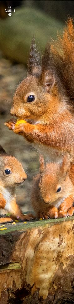 Squirrel & Babies