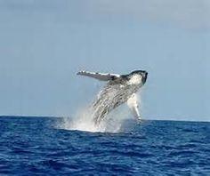 Bermuda Whale Watching Tours, Hamilton