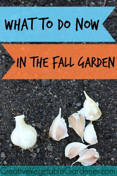 Completing a few small tasks in your garden in fall will set you up for a much easier spring.