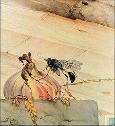 Vintage Maurice Edward Detmold Art Print Insects Pelopacus Spirifex Mason Wasp   eBay