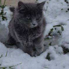 UMA. The Snow Cat.