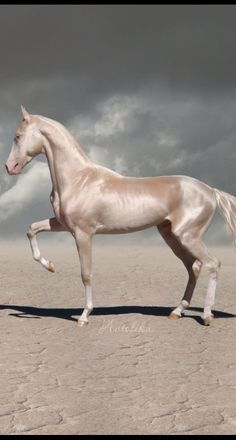 The Akhal Teke horse is a sight to be seen. That golden shimmer of it's coat is so magical! Most Beautiful Horses, Pretty Horses, Horse Love, Animals Beautiful, Cute Animals, Akhal Teke Horses, Appaloosa Horses, Breyer Horses, Horse Tack