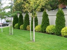 love the types of bushes and how they alternate along the back fence along
