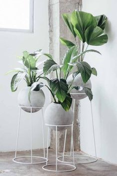 diy plant stand, indoor plant stand ideas, wood plant stand design, ladder plant… – Famous Last Words House Plants Decor, Plant Decor, Hanging Plants, Indoor Plants, Air Plants, Indoor Herbs, Small Plants, Indoor Gardening, Cactus Plants
