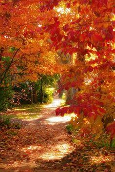 Autumn lane -- I'm not a sun worshiper but this sun dappled path seems to…