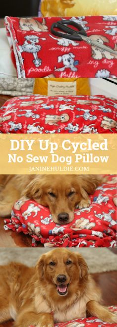 With the colder weather approaching soon, some much needed advice for how to prepare your dog, plus a DIY No Sew Dog Pillow craft. #RecipesWithPurpose #ad @naturesrecipe