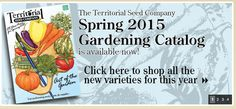 Spring—New Beginning—Planning