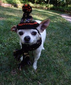 handmade black and orange crocheted cone doggie's hat by ChakaCoco