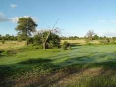 Beautiful view from Londolozi Lodge Game Resort - South Africa