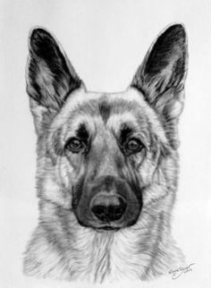 German Shepherd in charcoal by Katja Sauer - German Shepherd in charcoal by Katja Sau . - German Shepherd in charcoal by Katja Sauer – German Shepherd in charcoal by Katja Sauer by katjas - Animal Sketches, Animal Drawings, Art Sketches, Dog Crafts, Pencil Art Drawings, Cartoon Dog, Dog Paintings, Dog Portraits, Charcoal Portraits