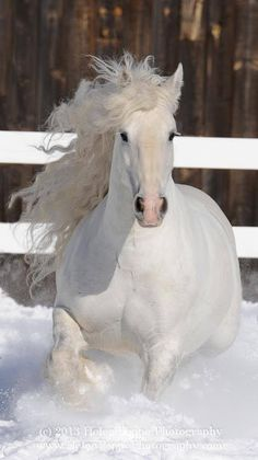 Wow! Such a stunning horse