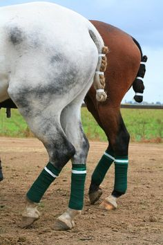 tacked up ..the green & white makes me think of MSU