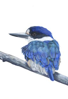 This listing is for an archival print of my original acrylic painting Out of the Blue    This is a Forest Kingfisher- one of my favourite birds. I