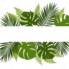 Tropical leaves background with white banner Vector Image , Cool Backgrounds, Wallpaper Backgrounds, Iphone Wallpaper, Wallpapers, Pastel Background, Leaf Background, Tropical Leaves, Tropical Flowers, Tropical Wallpaper