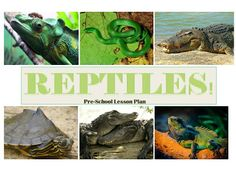 Reptiles lesson plan with crafts, books, games and a snake snack!