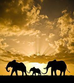 """epicurean-world: """" helloworldhavefun: """" mi mi mi """" … marvelous Sunsets in our common world… """""""