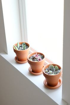 How to Grow Succulents From Cuttings Propogate Succulents, Succulent Cuttings, Succulents Garden, Experiment, Cactus, Planter Pots, Green, Plants, Fixer Upper