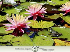 "Photo of the Day - January 26, 2012: ""Water lilies at the Mystic Aquarium."" Taken by Kristen Schmalzried (Manor, TX). Photographed July 2010, Mystic, CT."