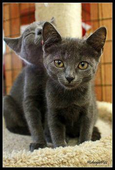 hurricane kittens