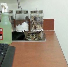 Te dejamos esta lista de causas comunes de emergencia veterinaria en gatos ¡¡Ojo!! ¡Algunas de ellas se pueden evitar!