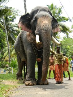 KERALA. This was such a beautiful picture until I noticed the chains around her feet!!!! Poor baby!!!