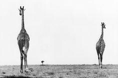 Marc Riboud - Kenya, 1961.