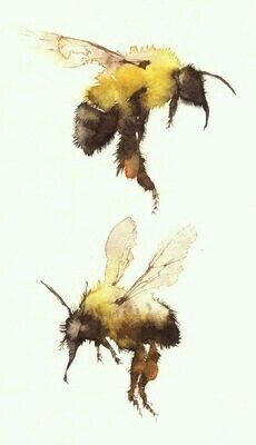 Bee watercolor painting *I don't have an artist to reference/recognize for this painting...
