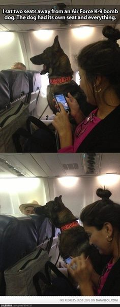 """They would have to move my seat. The """"do not pet"""" would be impossible for me."""