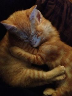 What an adorable picture of two siblings having a cuddle.