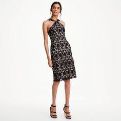 CLUB MONACO Taveon Lace Dress. #clubmonaco #cloth #