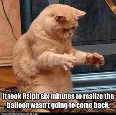 Funny cats - balloon