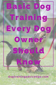 Dog Obedience Training - Any responsible dog owner will always be on the lookout for dog training tips that will help improve their dog's behavior. Get more dog training tips here! Basic Dog Training, Puppy Training Tips, Potty Training, Crate Training, Training Classes, Training Dogs, Leash Training, Training Schedule, Training Kit
