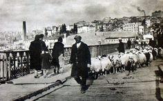 Unkapanı Köprüsü'nde koyunlar (1931)#istanbul #istanlook