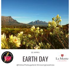 """Today is Earth Day! """"We can make a better world for everyone. Tell everyone you know about April 22 and join us at earthday.org as we flood the world with messages of hope, optimism and, above all — action."""" @EarthDayNetwork @WWFSouthAfrica #conservationchampion Citizen Science, Message Of Hope, Climate Action, Home Activities, April 22, Earth Day, Optimism, Worlds Of Fun, Something To Do"""