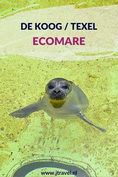 Een leuk uitje voor kinderen (en volwassenen) is zeehondenopvang Ecomare, net buiten De Koog, op Texel. Naast zeehonden leven hier 2 bruinvissen en is er binnen een zee-aquarium. De dieren worden op vaste tijden gevoed en jij kan daar bij zijn! Meer lezen doe je op mijn website. Lees je mee? #ecomare #zeehondenopvang #dekoog  #texel #nederland #waddeneiland #jtravel #jtravelblog