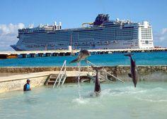 Royal Caribbean International & Carnival Cruise Lines: Stop selling dolphin excursions! Galveston Cruise, Dolphin Encounters, Western Caribbean Cruise, Costa Maya, Royal Caribbean International, Travel Destinations Beach, Cruise Port, Beach Trip, Mexico