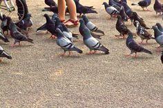 En Fila.  Patas y pies en la misma fila. Fotografía, Photos, Fotos,Animales, pájaros, palomas, patas y pies juntos.