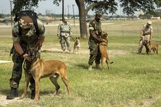 Lackland Air Force Base Working Military Dogs
