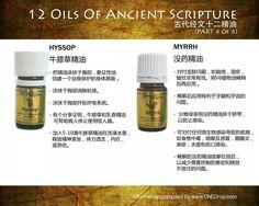 12 Oils of Ancient Scripture