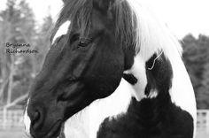 Farm Animals, Horses, Photography, Photograph, Fotografie, Photoshoot, Horse, Fotografia