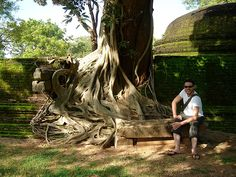 A tree in Polonnaruwa by Dan & Luiza from TravelPlusStyle.com, via Flickr