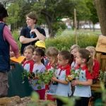Cultivation Street 2015: Special category community winners